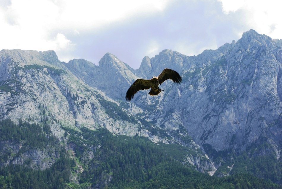 Bird of prey Adler flies over the mountains