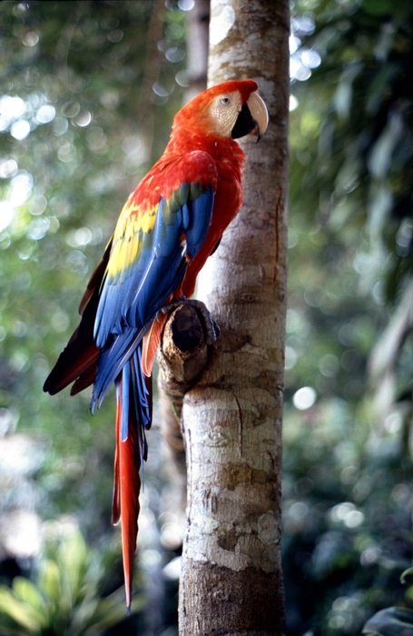 a colorful tropical parrot sits on a tree branch