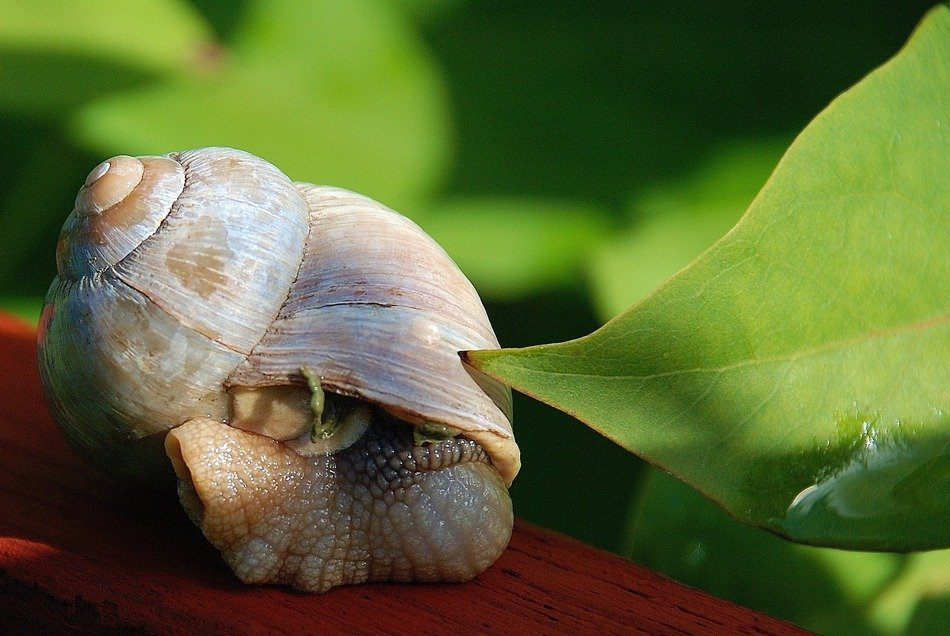 shell with a snail in the garden