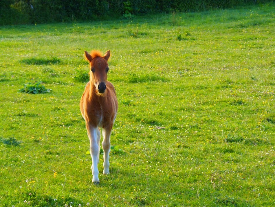 foal on bright green grass