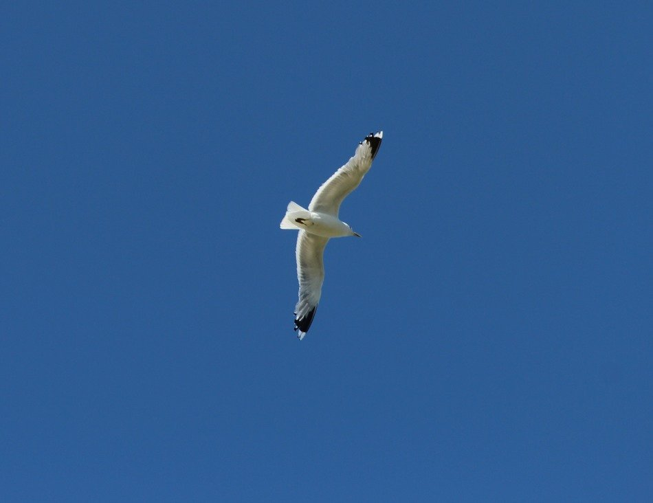 seagull on a photo of the wild nature
