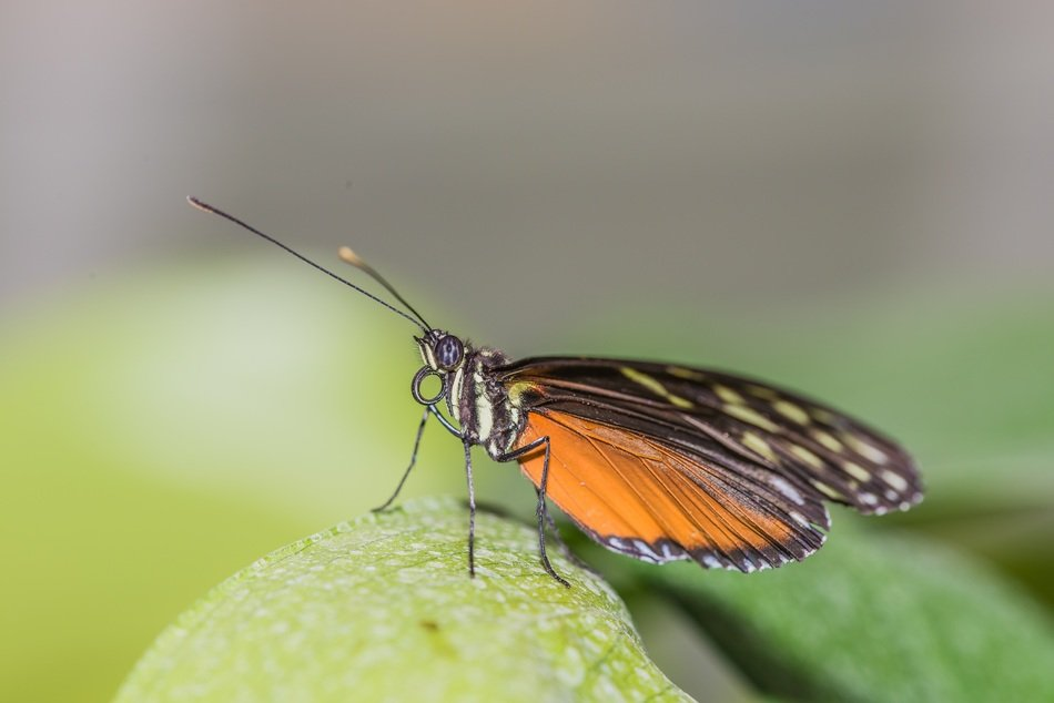 small butterfly sits on a plant