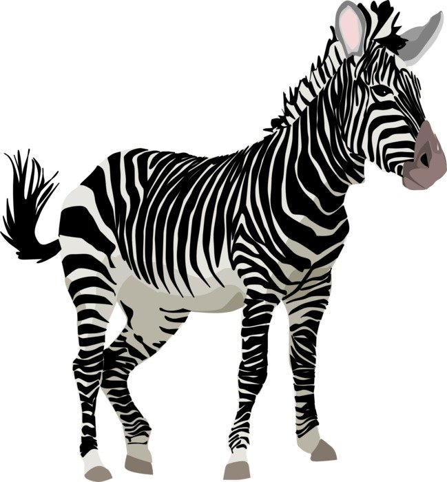 Illustration of striped zebra