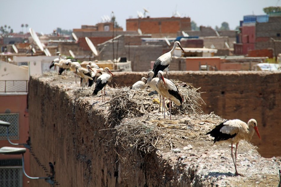 storks on the walls of the house