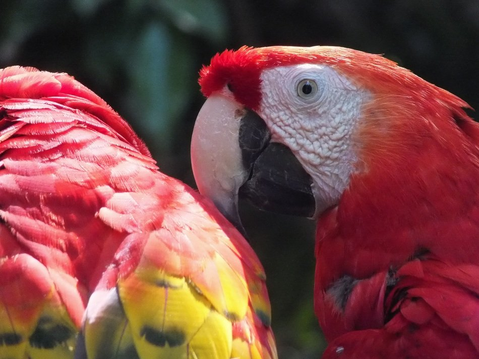 beautiful and amazing Parrot Ara