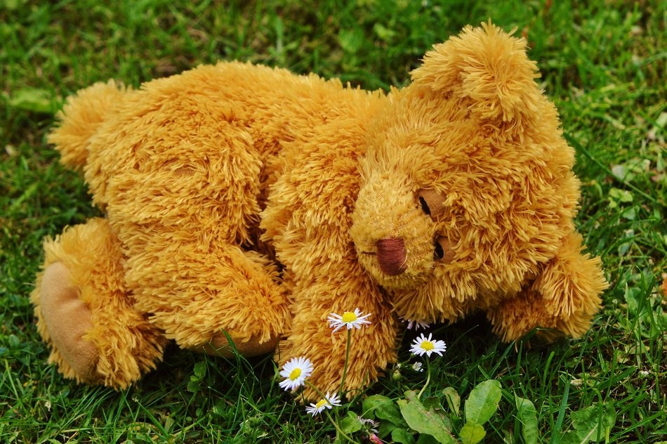sleeping teddy bear outdoor
