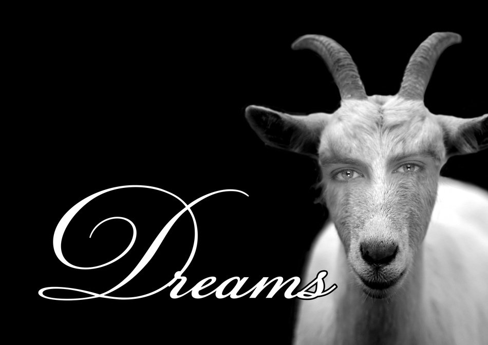 photo of a white goat and the inscription of a dreams