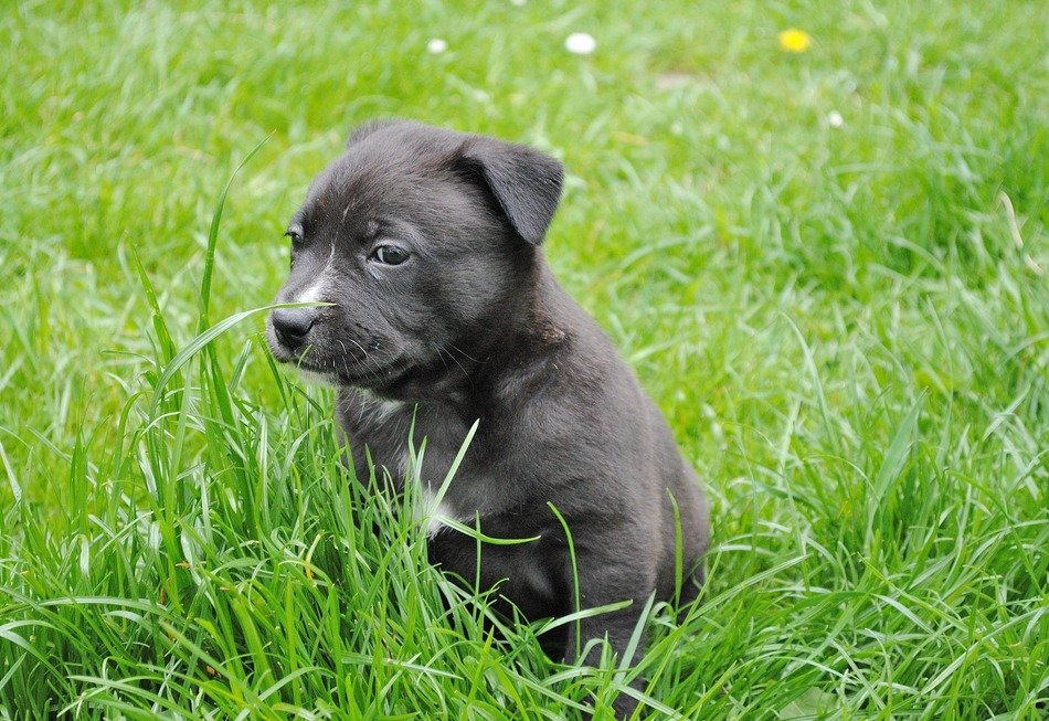black puppy among green grass