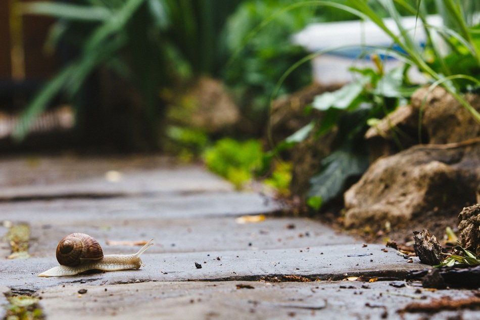 snail crawling on the garden path