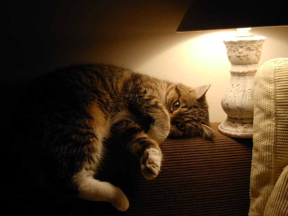 cat under the table lamp
