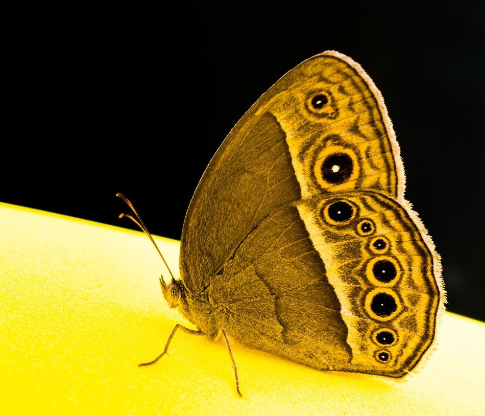 amazing butterfly sitting on yellow surface