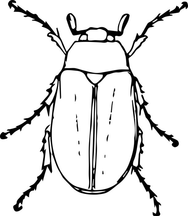 blak and white drawing of a beetle