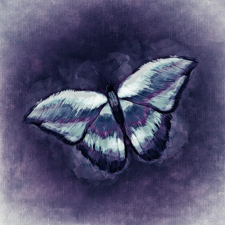 drawing of a butterfly on the purple background