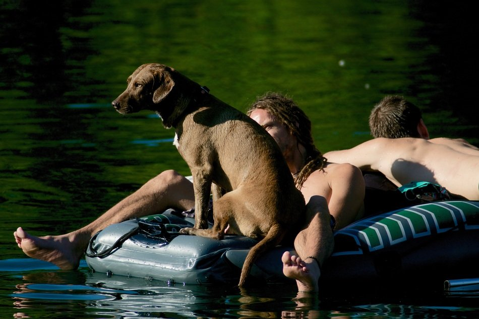 people and dog on an inflatable mattress in the lake