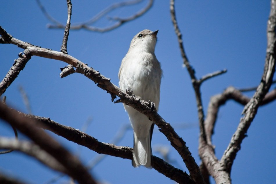 white bird on a branch close up