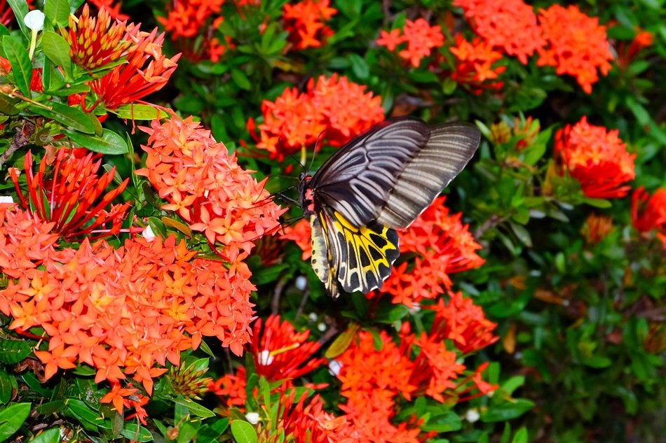 butterfly on a green bush with red flowers