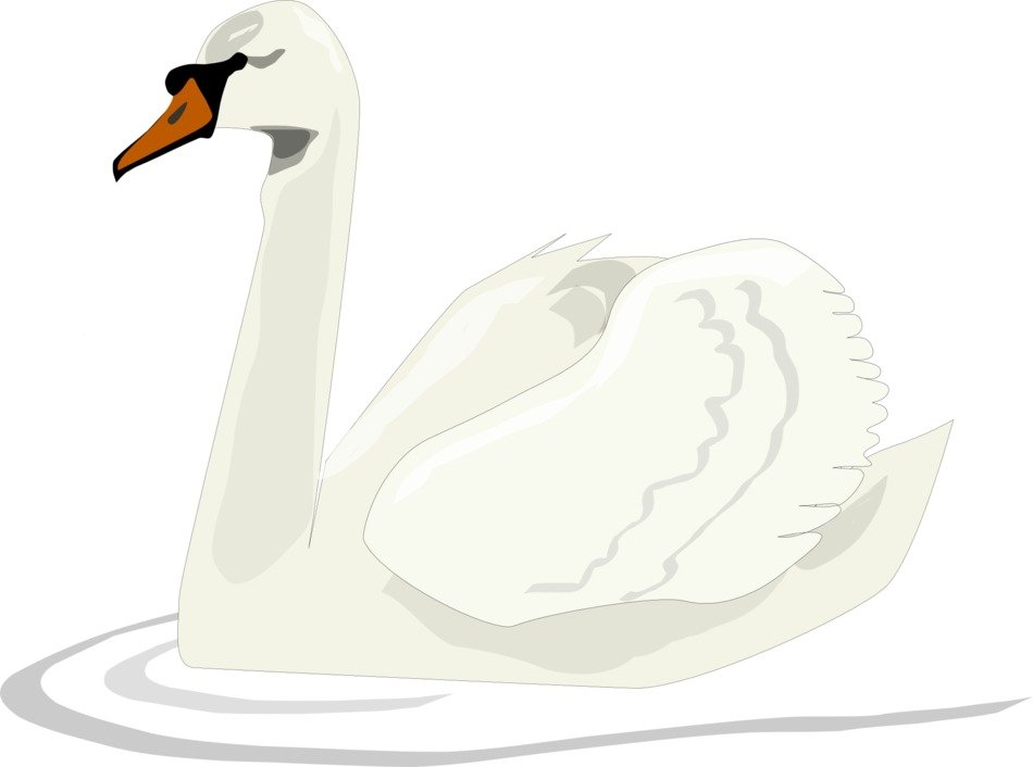Clipart of Swan Bird