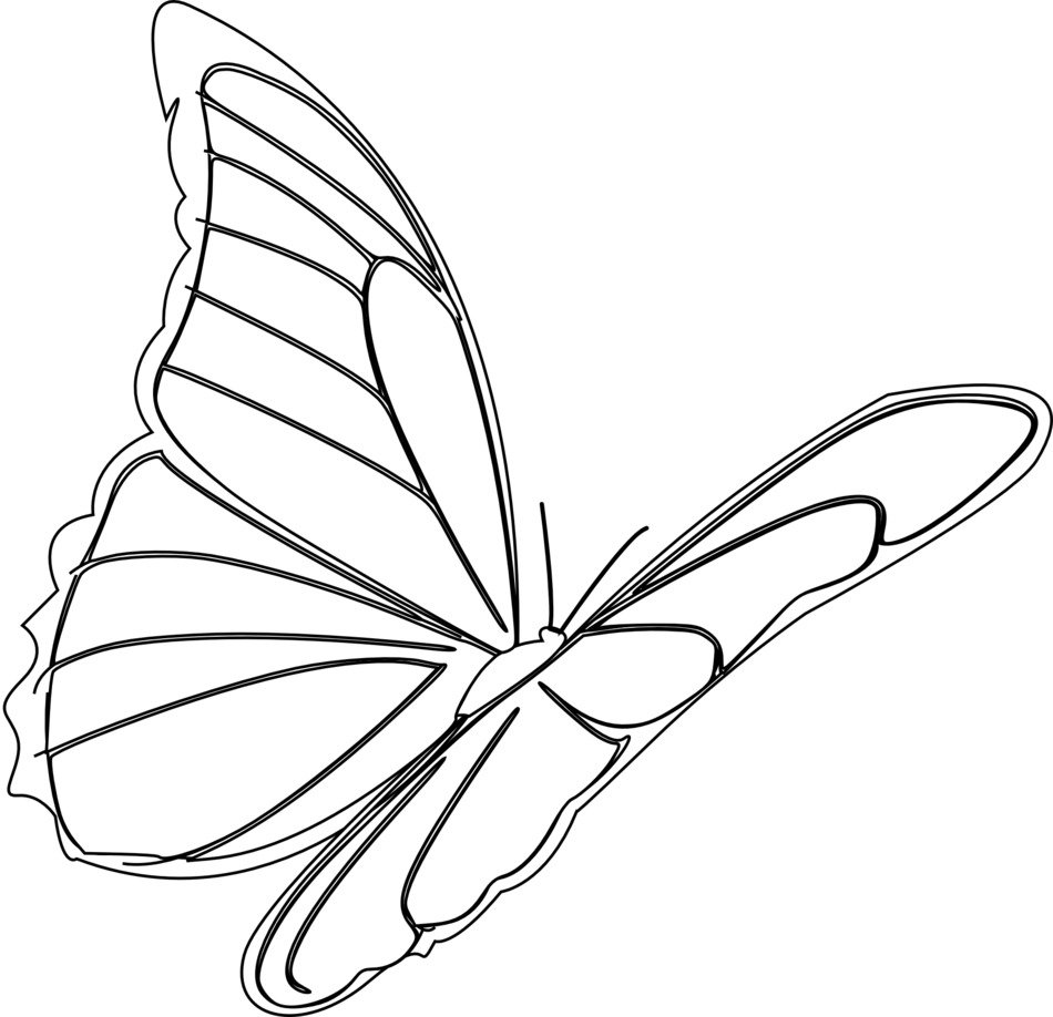 butterfly, black outline for coloring on a white background