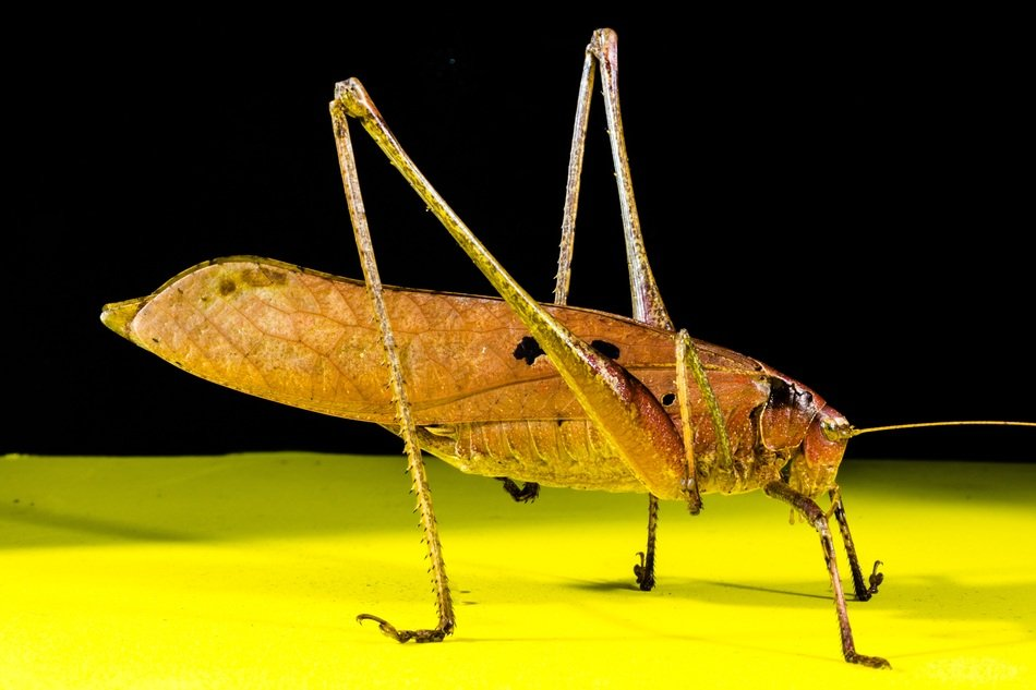 grasshopper on the surface