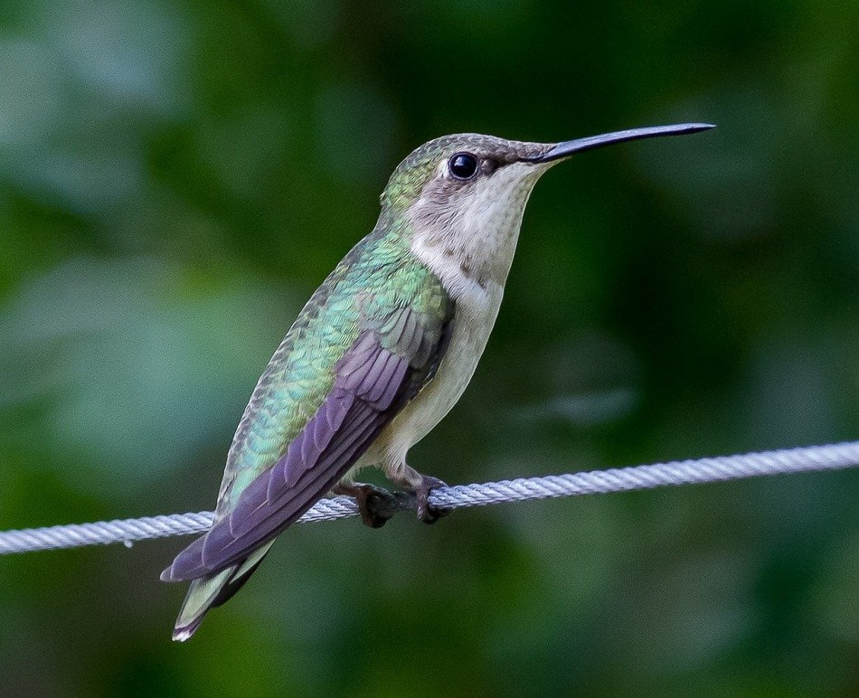 little hummingbird is sitting on a rope