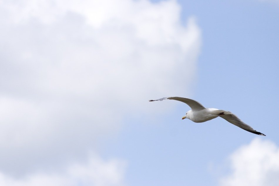 white seagull in the sky