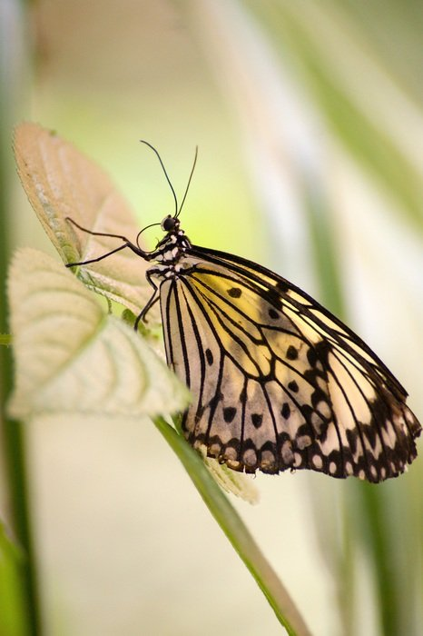tropical butterfly on the plant stem