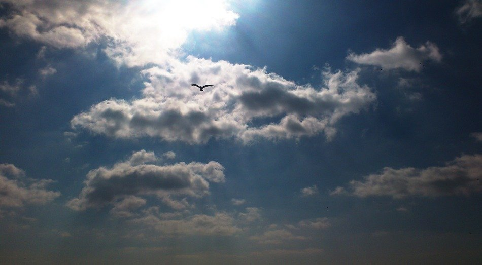 The Sky with Clouds and Seagull calm scene