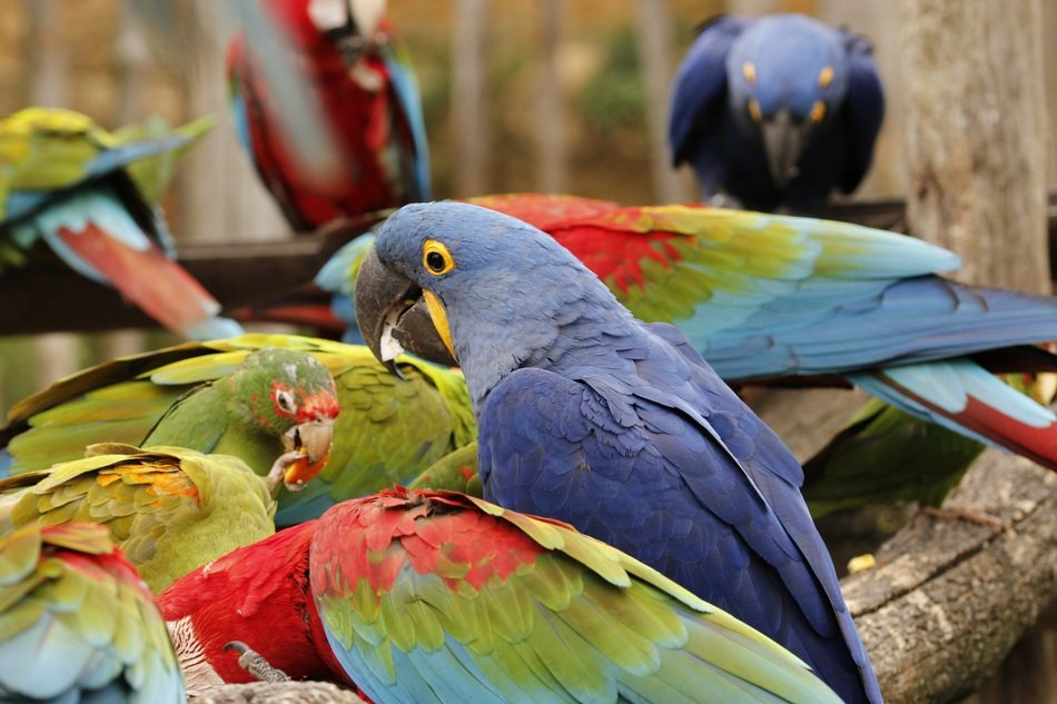 exotic colorful parrots in nature