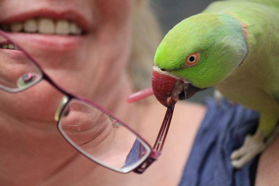 Parrot is taking a glasses