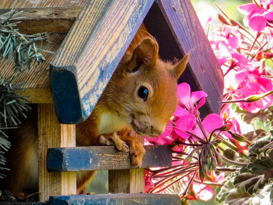 squirrel in its house in the garden