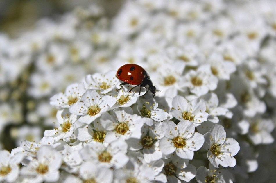 Summer Flowers with lady bug