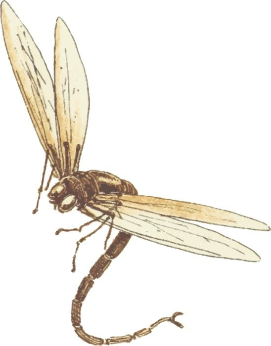 drawing of big dragonfly