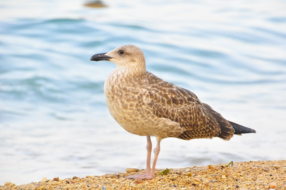 Picture of the seagull on a beach