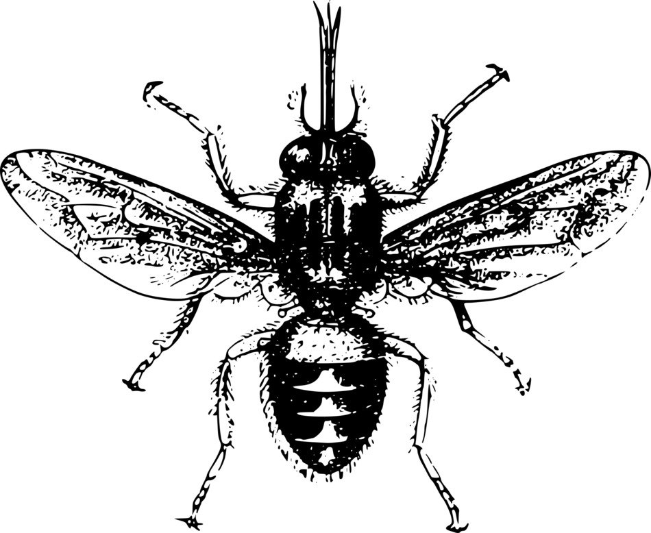 Clipart,picture of 'sleeping sickness' insect