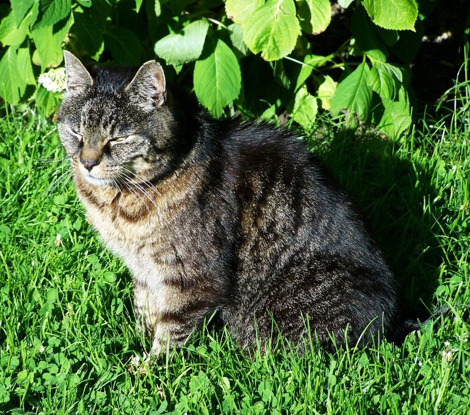 Brown-Gray Cat