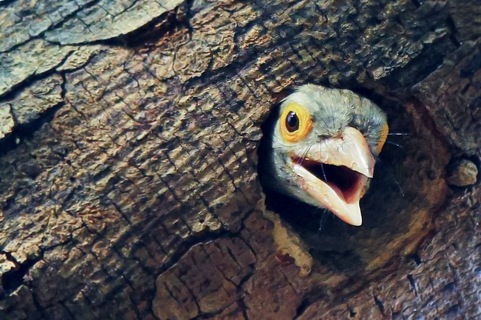 Bird in a hole in a trunk