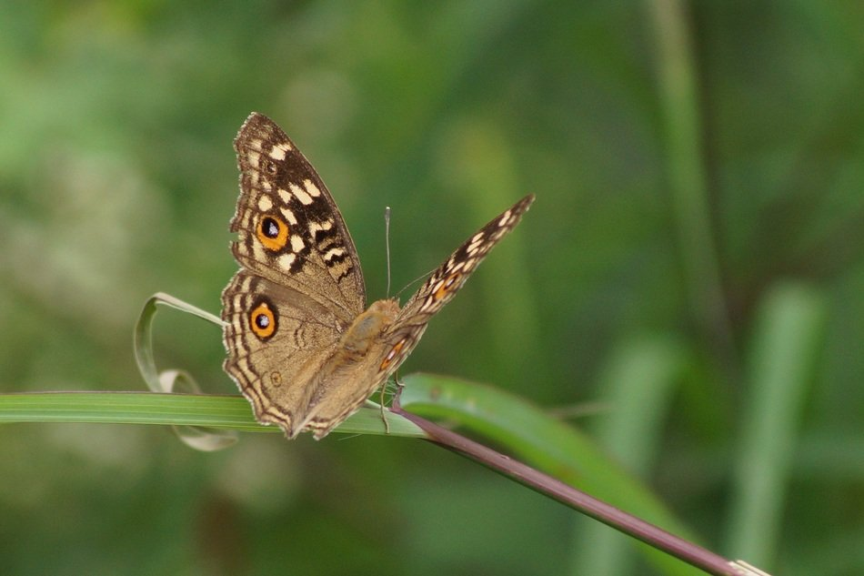 Beautiful brown butterfly on the plant