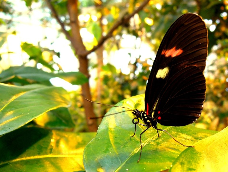 side view of a butterfly