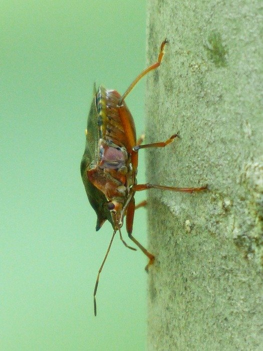 insect with red legs on a stone wall
