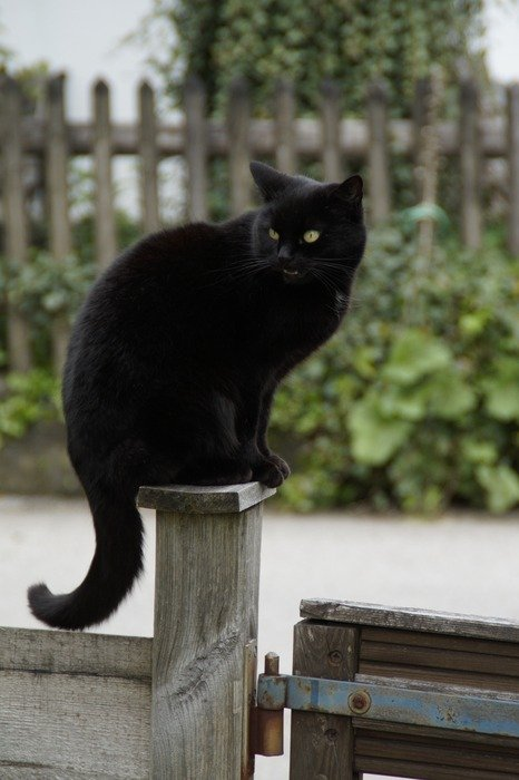 black cat sitting on the wooden post