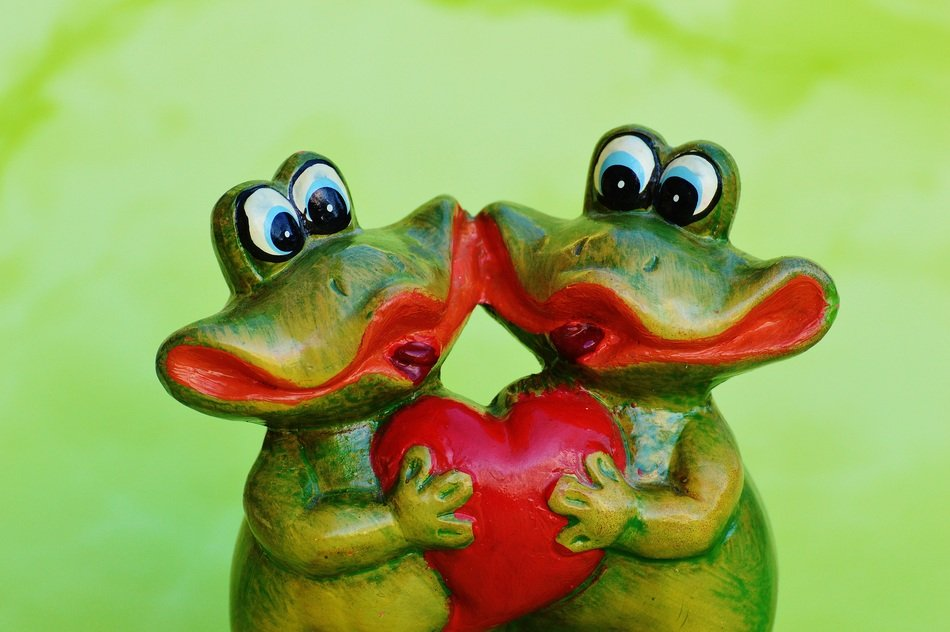 two frogs with a heart in his hands
