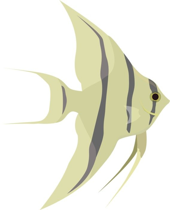 Drawing of striped fish