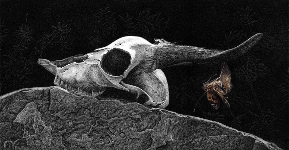 skull of a animal on a large stone