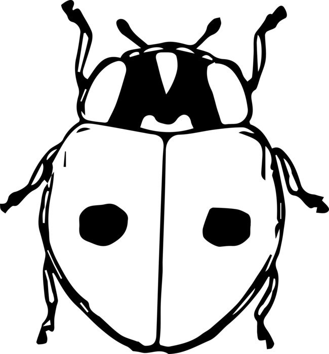 drawing of a beetle in black and white