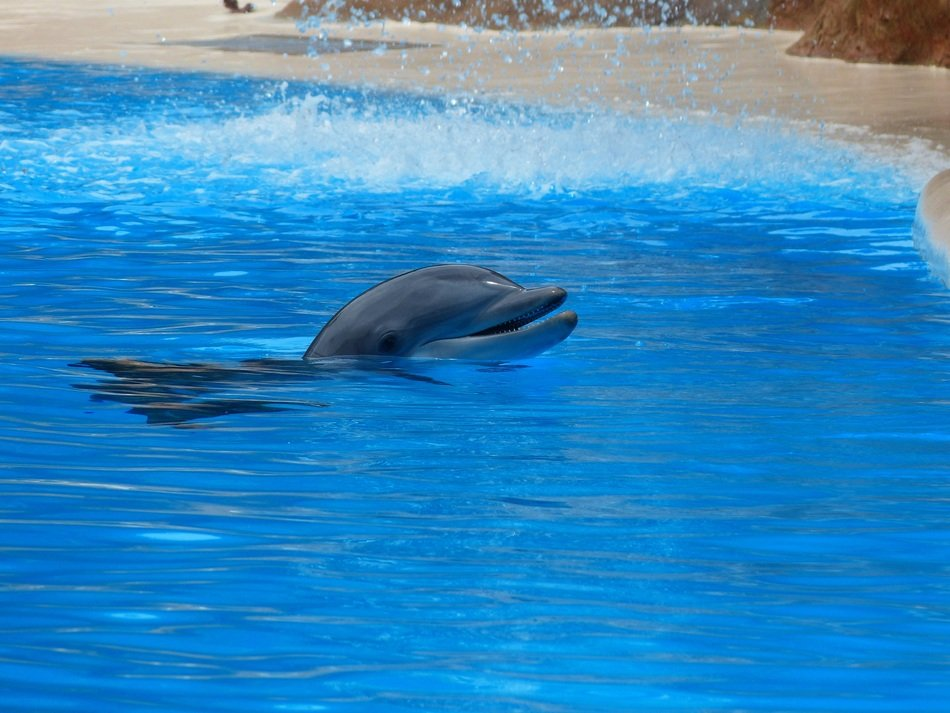 dolphins are jumping on a pool show