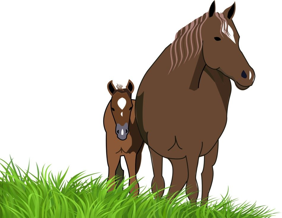 drawn foal with mare