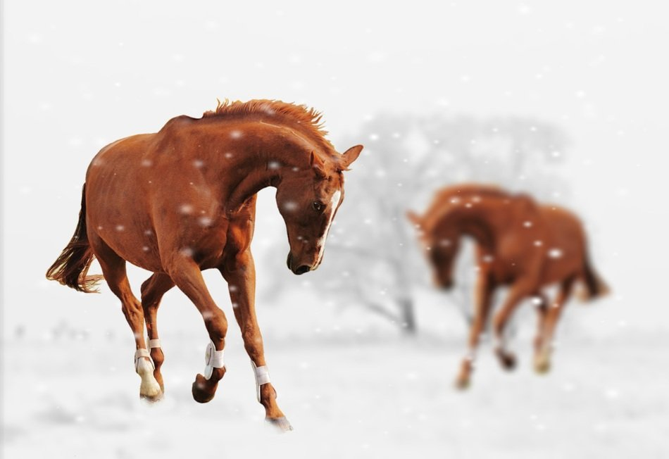 red horses on the snow field