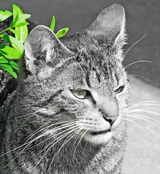 domestic cat in green leaves