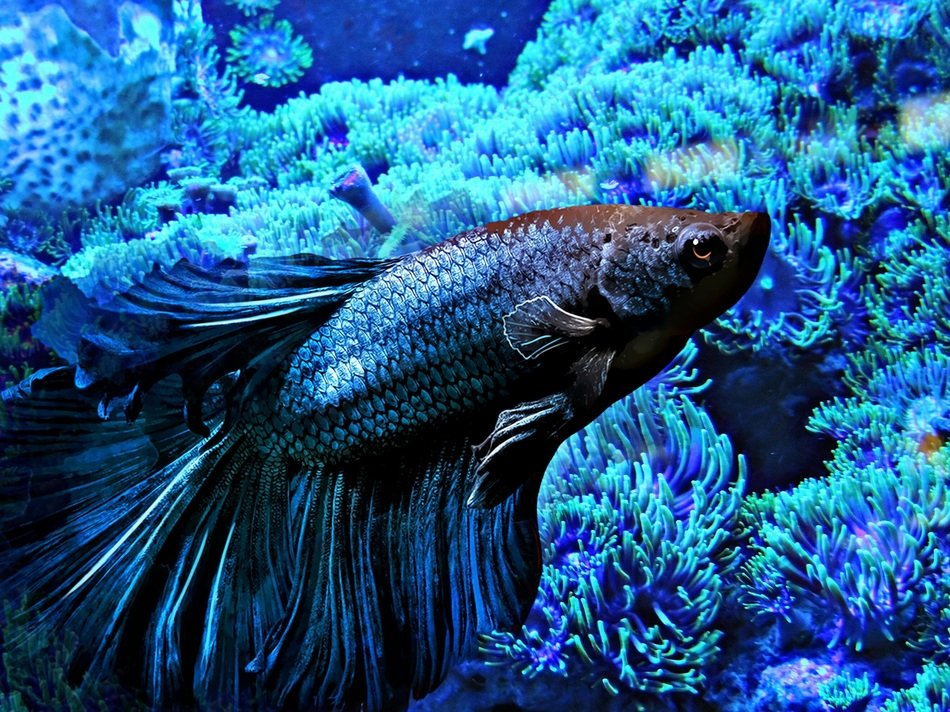 wonderful blue quarium fish