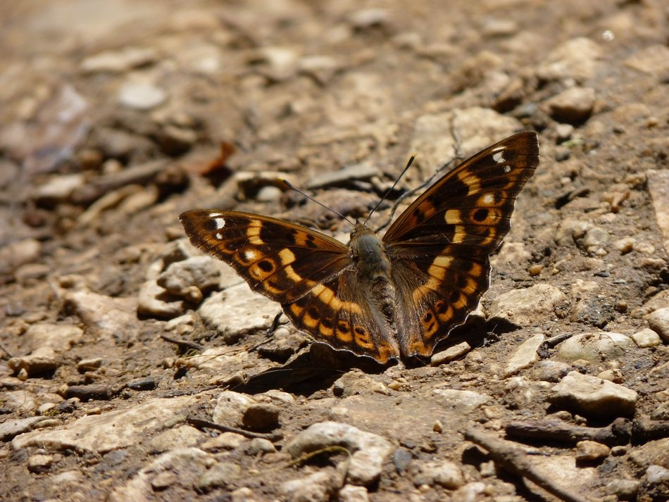 brown butterfly in nature